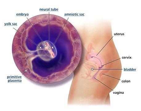 Mang thai tuần 4-5