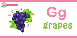 Flashcard cho bé grapes