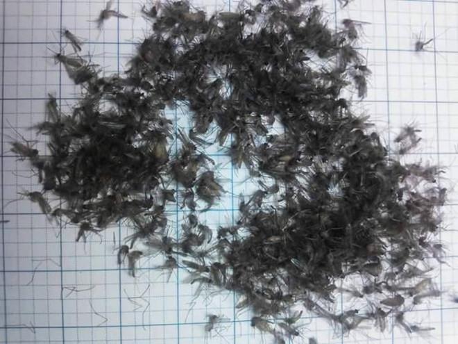 Mẹo bắt muỗi không tốn một xu mà hiệu quả đáng kinh ngạc