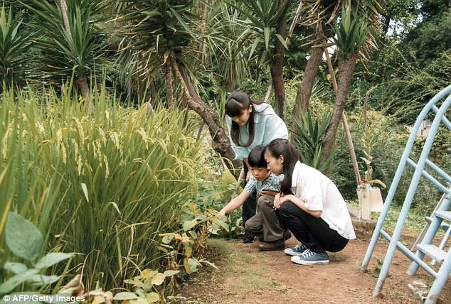 Cách Hoàng gia Nhật nuôi dạy Hoàng tử Hisahito khiến ai cũng ngưỡng mộ.