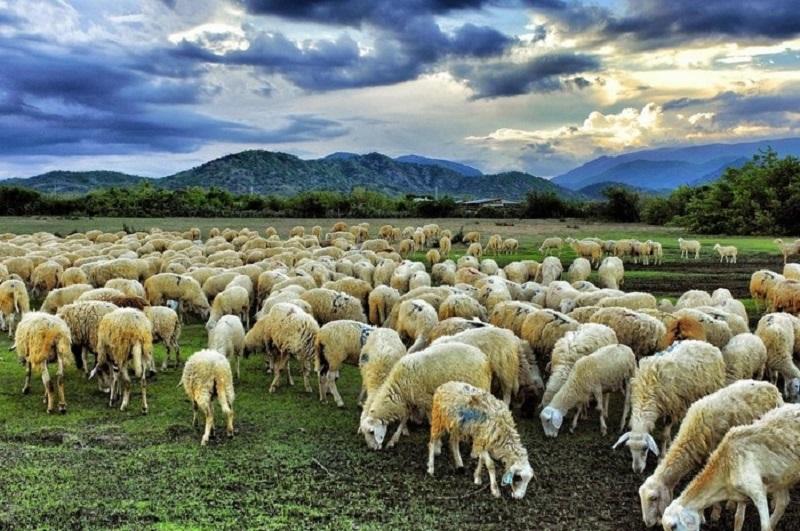 Nếu làm cừu bạn sẽ chọn kẻ thù là sói hay là sư tử?