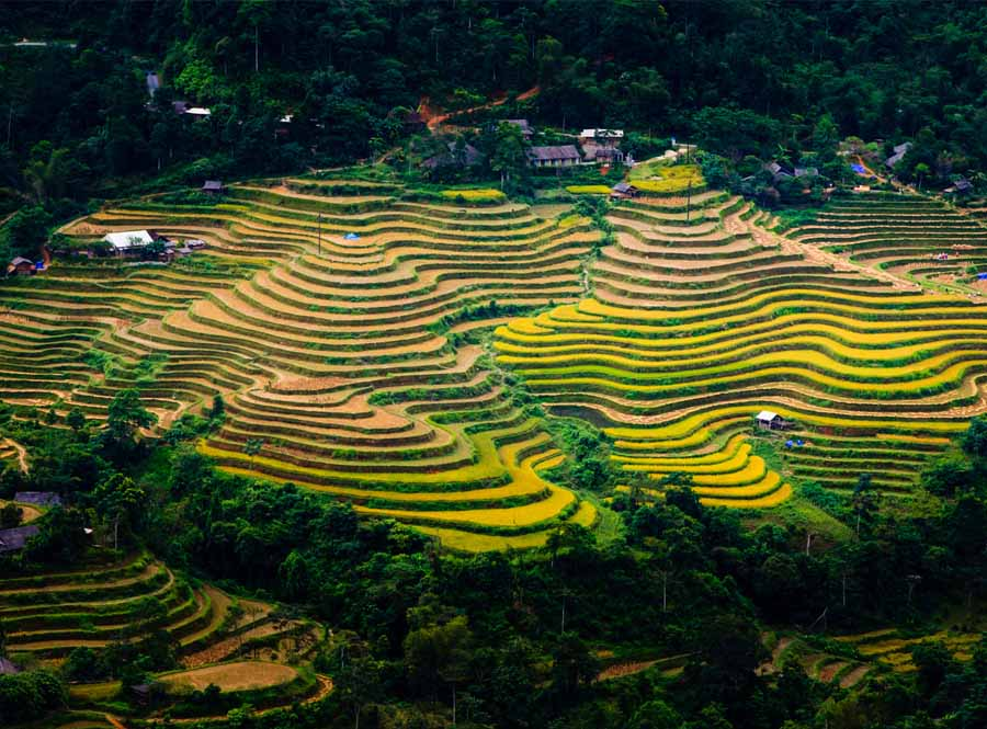 vietnam-rice-terrace-long-tran-minh